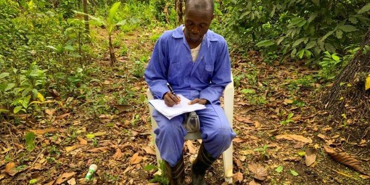 Escuelas de cacao en medio del bosque: así aprenden a cultivarlo los nuevos agricultores