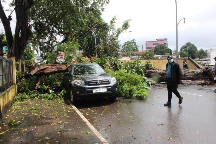 Cae un árbol en la Avenida de la Independencia de Malabo