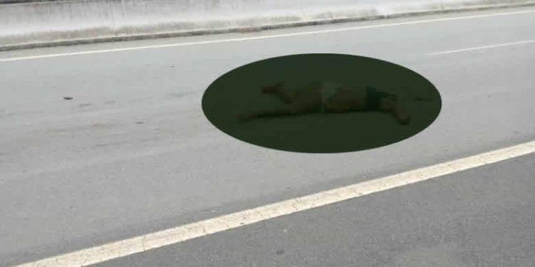 Hallazgo de un cadáver en la autopista Añisok-Djibloho