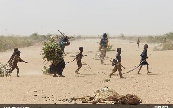 Catorce países africanos están muy amenazados por los crecientes niveles de hambre aguda (ONU)