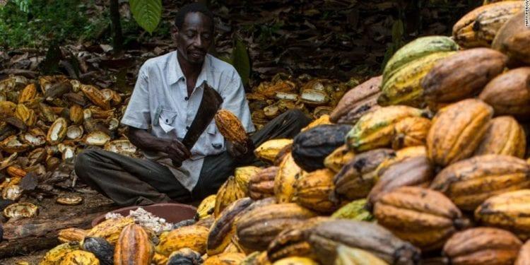 INPAGE informe sobre la exportación de más de 200 mil kg de cacao al mercado internacional