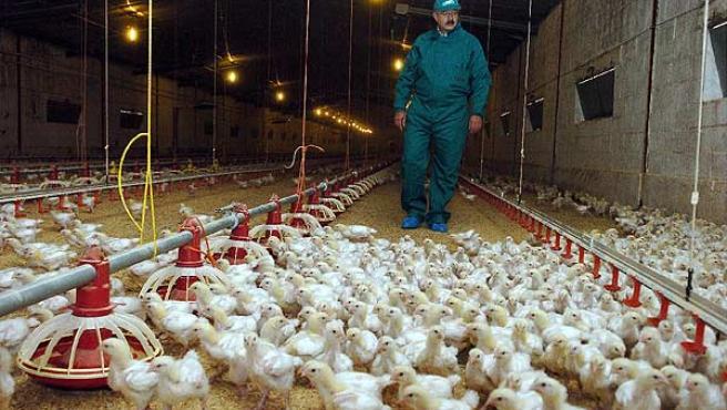 Rusia alerta a la OMS al detectar el primer caso de transmisión a humanos de la cepa H5N8 de la gripe aviar