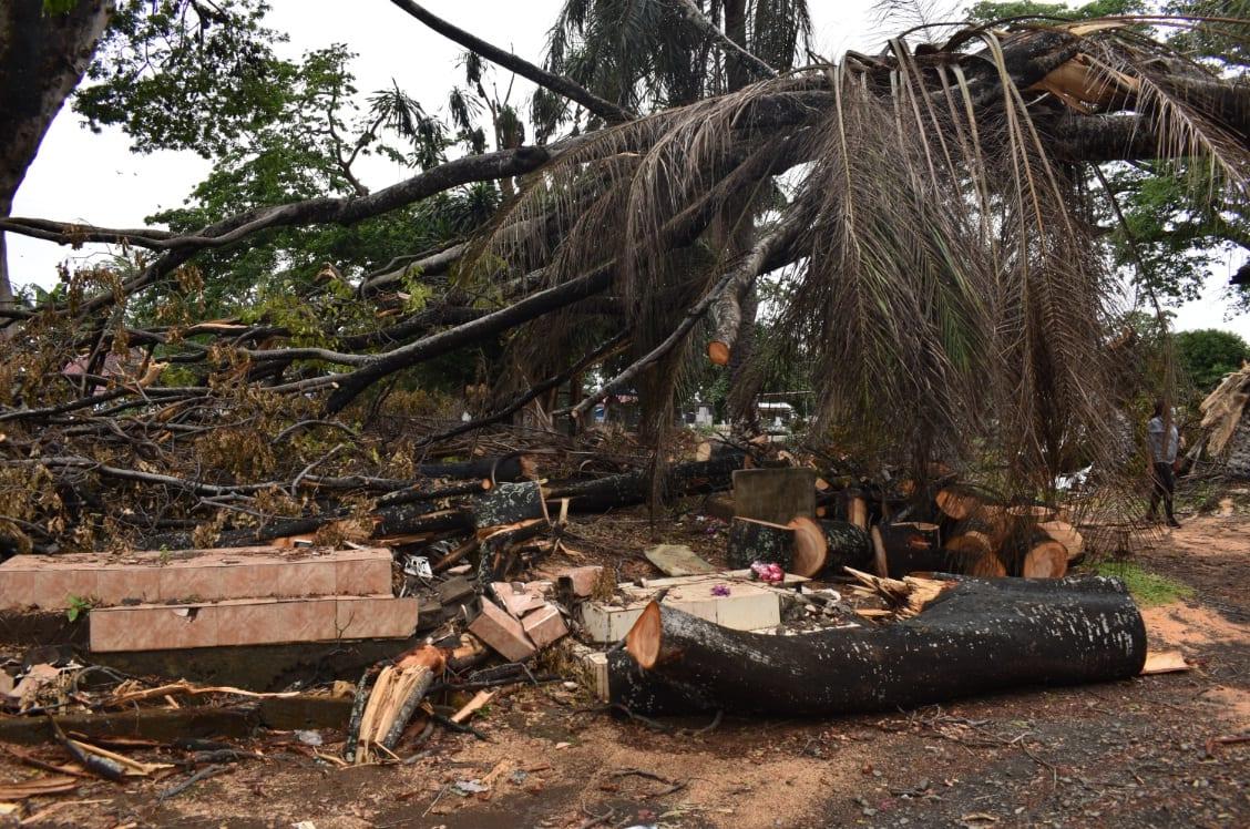 Dos árboles se desploman y destruyen varias tumbas en el cementerio de Ela Nguema