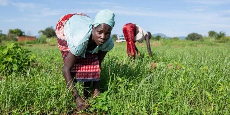 Perspectivas económicas en África: se prevé una recuperación del crecimiento del 3,4% en 2021 (38,7 millones de personas en riesgo de pobreza extrema