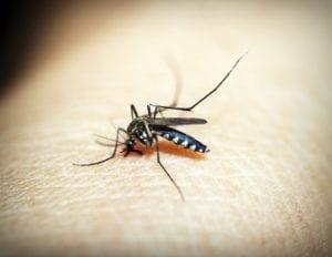 Un estudio del equipo del PEPIB revela que el actual tratamiento para la malaria podría crear falsos positivos