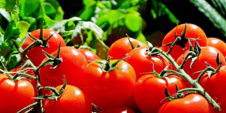 10 errores que no puedes cometer al elegir tomates