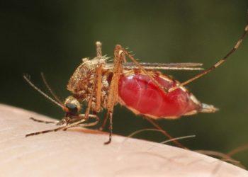 BioNTech prepara una vacuna contra la malaria con la técnica ARNm
